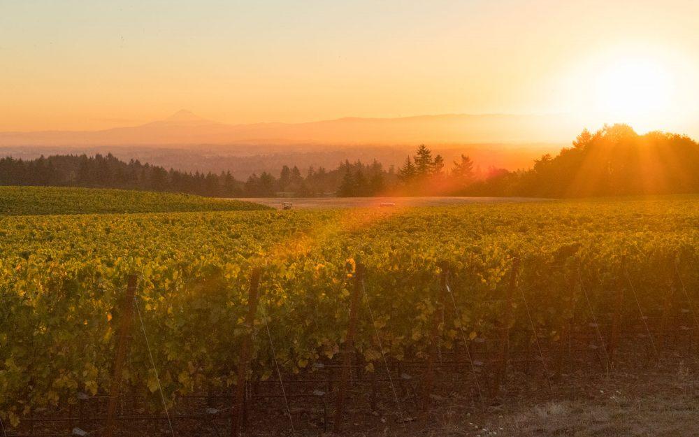 Sunrise over Roserock vineyard