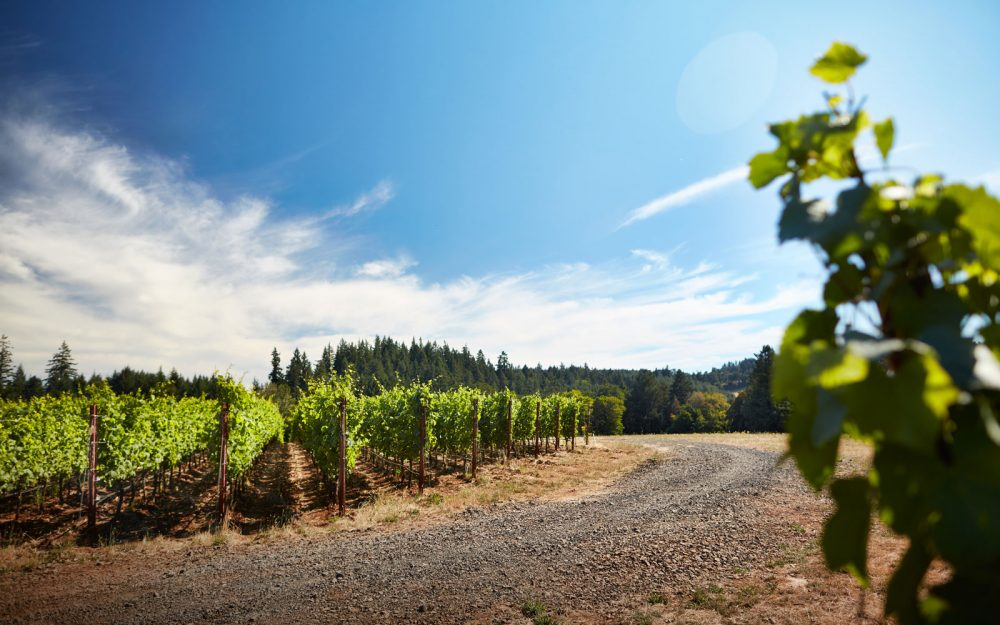 Gravel drive through the vineyard on a sunny day