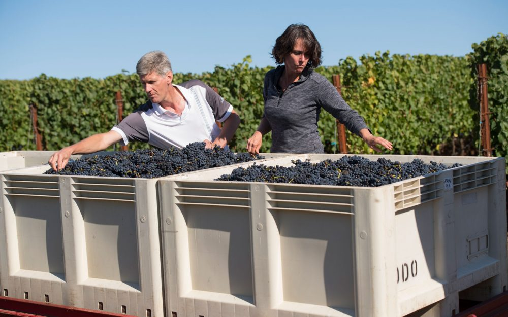 Philippe Drouhin and Leigh Bartholomew inspect grapes in bins
